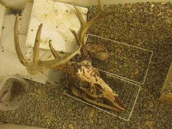 Craven Deer Processing and Skull And Bones Taxidermy